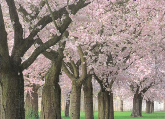 《春在枝頭─靜七開示錄》介紹 (文:桂魄流光)